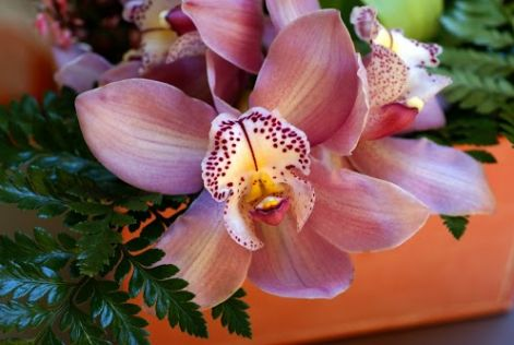 beautiful-orchid.jpg